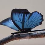 2次元ナノ導電材料を用いた人工筋肉アクチュエータが見せるアート性