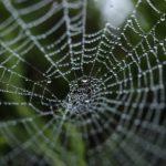 擬似タンパク質ポリマーを使用したクモの糸のような繊維